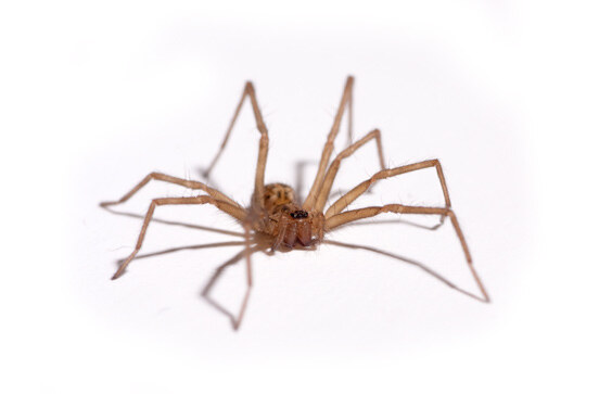 house-spider-control-bay-area