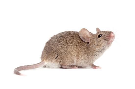 mice-control-bay-area