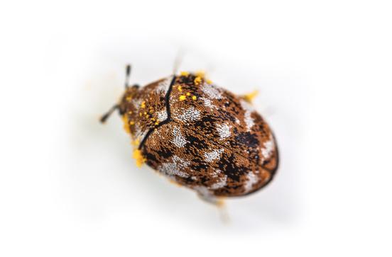Image Result For Image Result For Orange Oil Pest Control