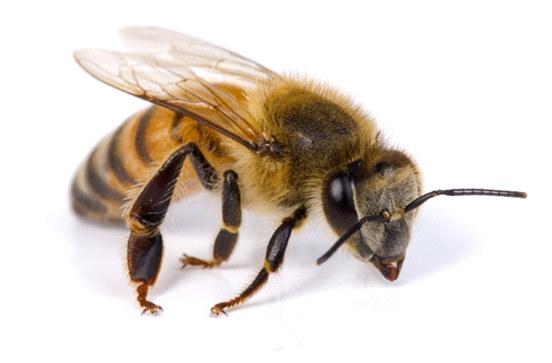 bay-area-bees-control