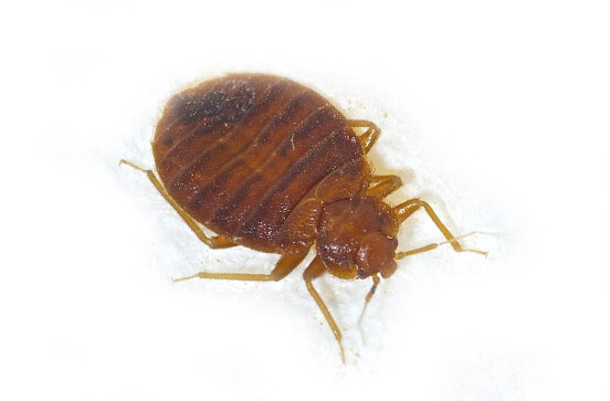 best-bay-area-bed-bug-control
